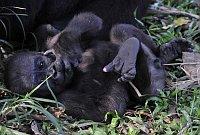 Limbe Wildlife Centre (Фото: Петр Славик)
