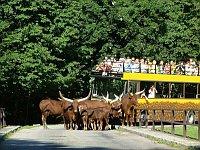 Зоопарк в городе Двор Кралове на Эльбе