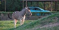 Авто-сафари в Зоопарке Двур Кралове