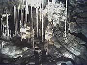 «Бамбуковый лес» из сталагнатов. Фото: 550.